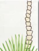 Steuler BONGOBONGO Palmenstamm/Fächerkante St-Y34073001 Dekor 25x33 matt